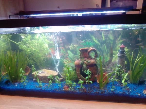 Aquarium einrichtung neu und gebraucht kaufen bei for Aquarium einrichtung
