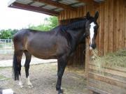 Wieße zur Pferdehaltung