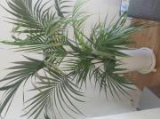 Zimmer Pflanze mit
