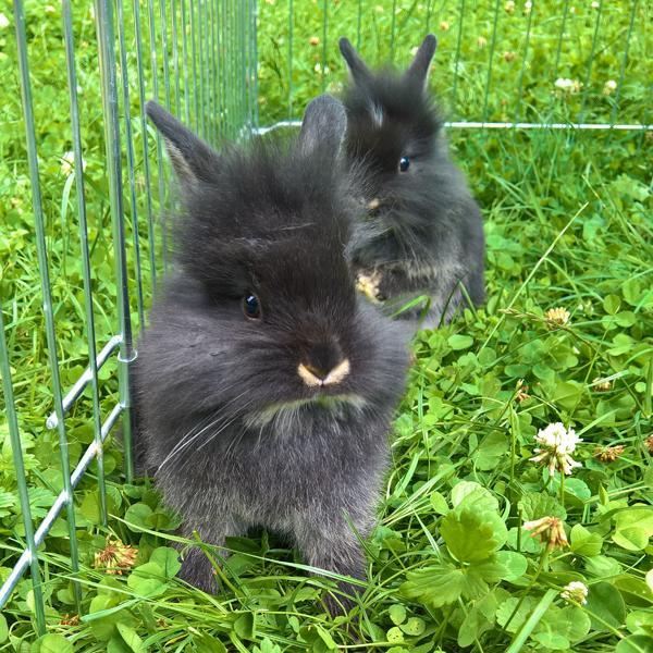 Zwei süße kleine » Kleintiere